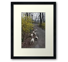 9 Pyrenees Puppies A Walking! Framed Print