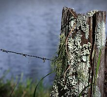 bilabong fencepost  by Clare Colins