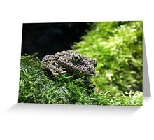 Mossy Frog Greeting Card
