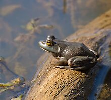 Frog Waiting for Flies by Henry Plumley