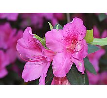 Flowers at its best! Photographic Print