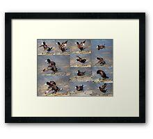 Collage of  Blue Bill Ducks. Framed Print