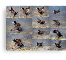 Collage of  Blue Bill Ducks. Canvas Print
