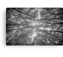 Reaching Frost Canvas Print