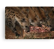 Spotted Hyena Scavenging at Night Canvas Print