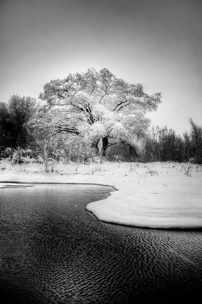 Winters Tree by Bob Larson