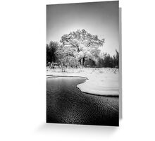 Winters Tree Greeting Card