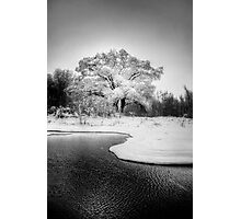 Winters Tree Photographic Print