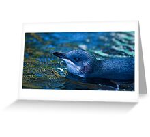 Little blue Penguin Greeting Card