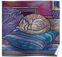 cat on a cushion  Poster