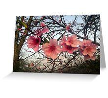 Blooming Pink Greeting Card