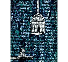 The Bird Cage Photographic Print