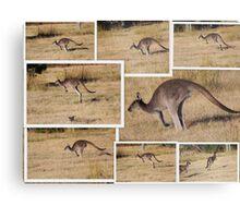 Kangaroos  Hopping Metal Print
