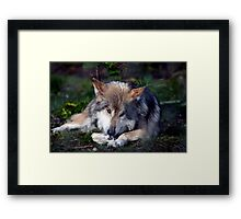 These big paws are high maintenance........... Framed Print