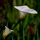 Two lilies by Celeste Mookherjee