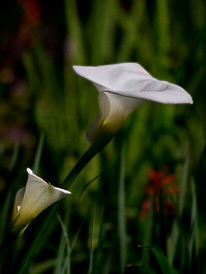 Two lilies by Celeste Mookherjee