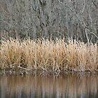 Swampy Dry Grass by Diego  Re