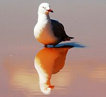 Seagull Reflected. by alycanon