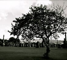 Cemetery Tree by Julian Bailey
