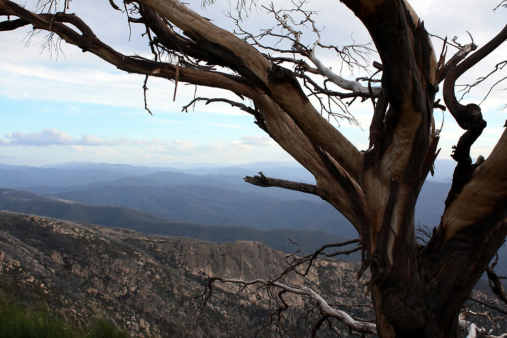 The Horn Mt Buffalo - Victorian High Country by Emmy Silvius
