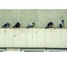 Waiting For The Dole.... Photographic Print