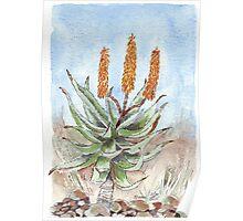 Aloe ferox painting 1 Poster