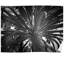 Scary Tree - Botanic Glasshouse Poster