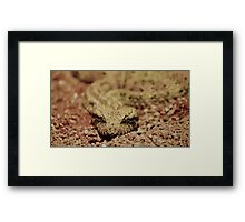 Deathly stare Framed Print