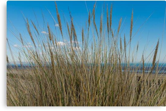 Dune Grass by JEZ22