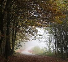 Path in Autumn by ienemien