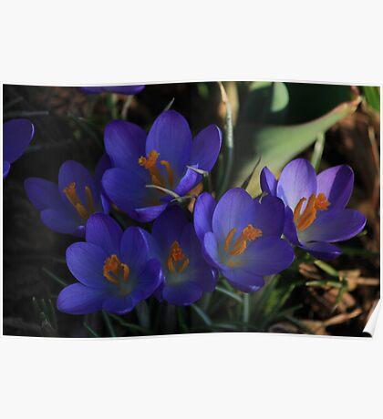 Sign of spring Poster