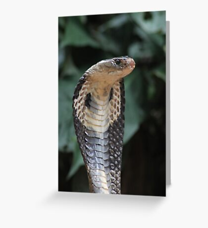 I am not slimey Greeting Card