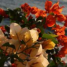 Golden and Orange - Dorado y Naranja by PtoVallartaMex