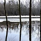 Eels Creek Reflections- Early Spring 2012. by Tracy Faught