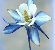 Blue Columbine by WishesandWhims