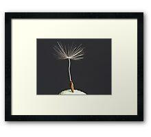 The last dandelion Framed Print