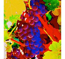 Artistic Grape Vine Photographic Print