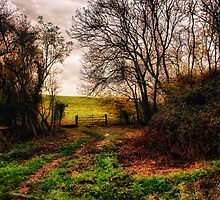Muddy Country Path HDR by Vicki Field