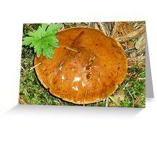 Pancake Fungi Greeting Card