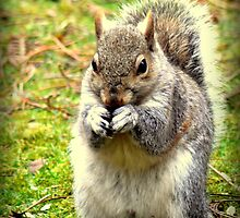 Pretty please can I have a nut. by Colin Metcalf