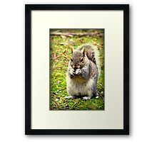 Pretty please can I have a nut. Framed Print