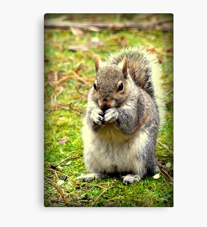 Pretty please can I have a nut. Canvas Print