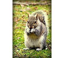 Pretty please can I have a nut. Photographic Print