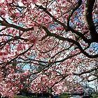 Spring Blossoms, New York City  by Alberto  DeJesus