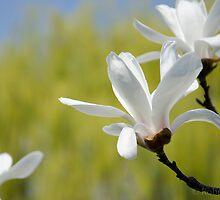 Spring Begins Again... by peregrineRob