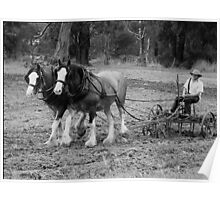 Two Working Horses - Nyora, Gippsland Poster