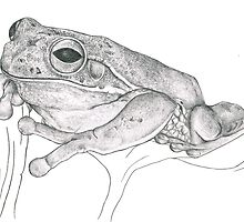 Frog by Lisa Lawrence