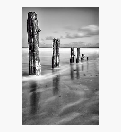 The Old Guardians Photographic Print