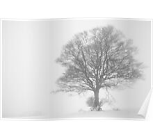 Tree in a white out Poster