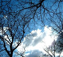 Branches with sky, New York City  by Alberto  DeJesus